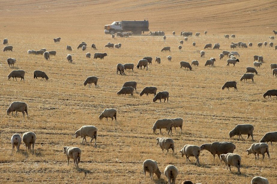 2017: Agriculture Begins to Tackle Its Role in Climate Change (Inside Climate News)