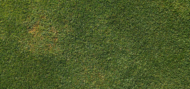 USDA Grants Final Approval for Monsanto/Scotts' Genetically Engineered Grass (EcoWatch)
