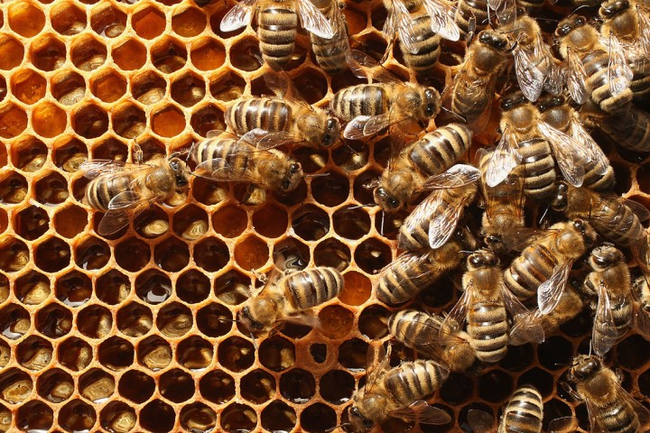 Solving the Bee Crisis One Robot at a Time: How Do Robot Bees Work?