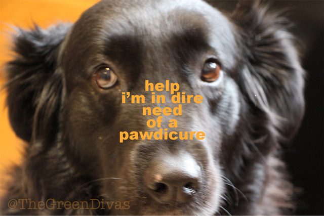 Winter is ruff on dog paws: give your woof a pawdicure!