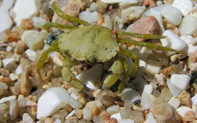 Fascination in rocky pools and their invertebrate inhabitants