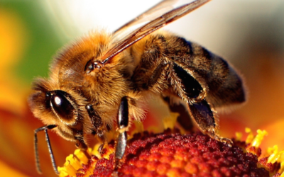 Help stop bee-killing pesticides in Canada