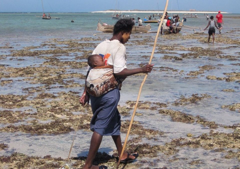 My 'aha!' moment: In Madagascar, a fisheries discussion without the fishers