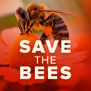 Pesticides are killing bees and the U.S. government knows it