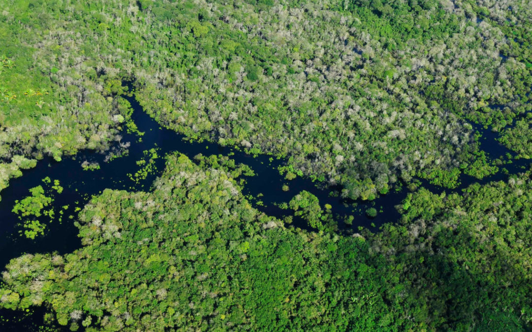 Surveying the Amazon Rainforest from the Sky