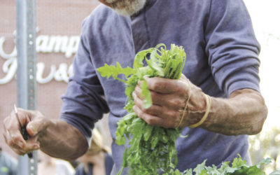 Third-annual food safety workshop for farmers market vendors to be held