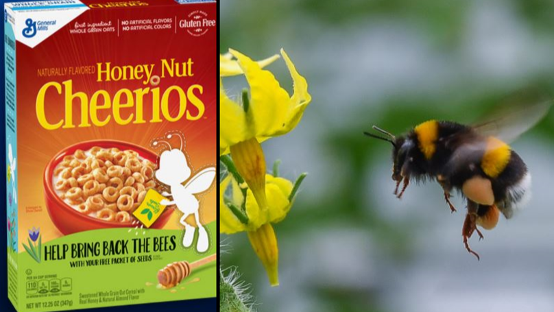 We Should All Be Concerned About Honey Nut Cheerios' Missing Mascot