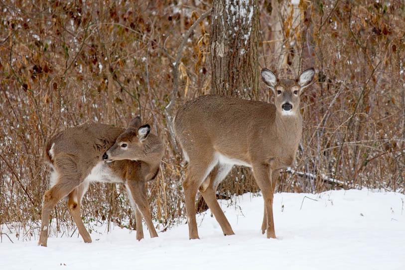 Deer-Resistant Edibles for Your Garden