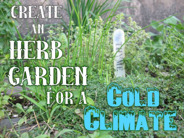 How to Grow Mediterranean Herbs in a Cold Climate