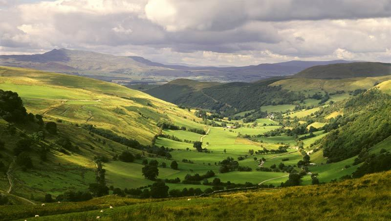 Make sure Brexit is good for Britain's countryside and wildlife.