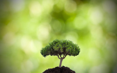 PLANT TREES : HOW TO GET INVOLVED