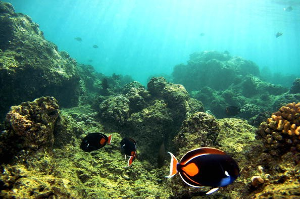 Rising Sea Levels, Sea Floor Erosions Could Negatively Affect Coral Reefs, Coastal Communities