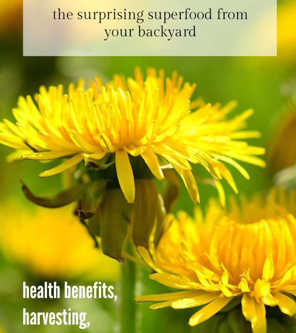 The Surprising Superfood From Your Backyard: Dandelions