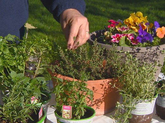 You Can Grow It: Expand your herb garden