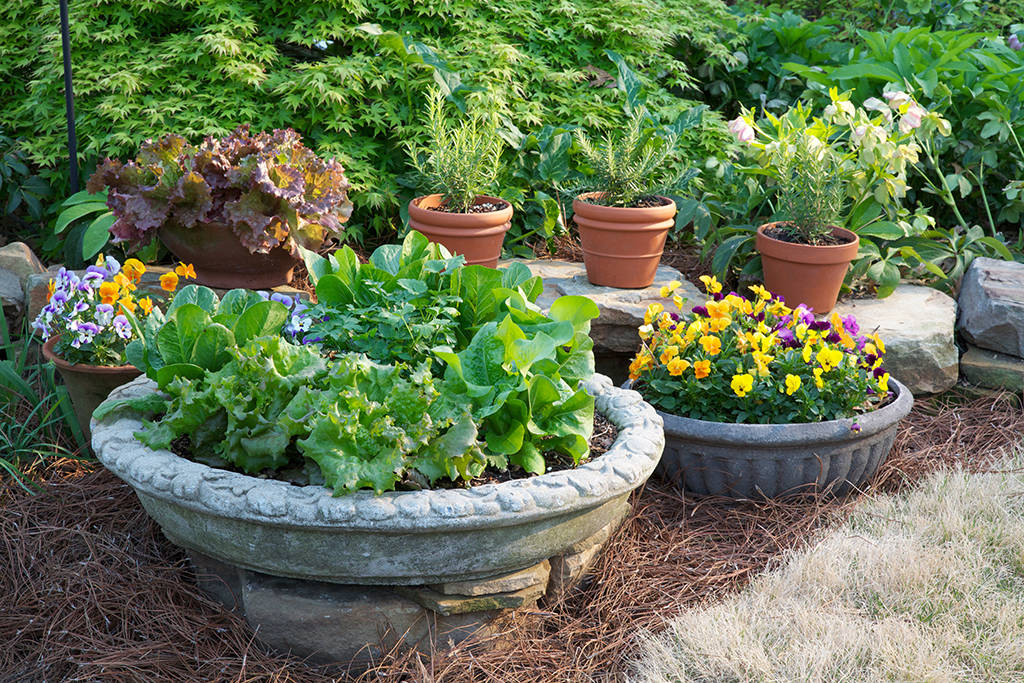 5 tips for container gardening success eco save earth - Container gardening basics ...