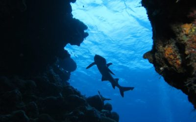300 hours underwater: Delight and danger diving in Lau