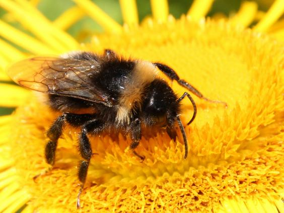 MEPs throw out Tory bid to prevent a full EU ban on bee-killing pesticides