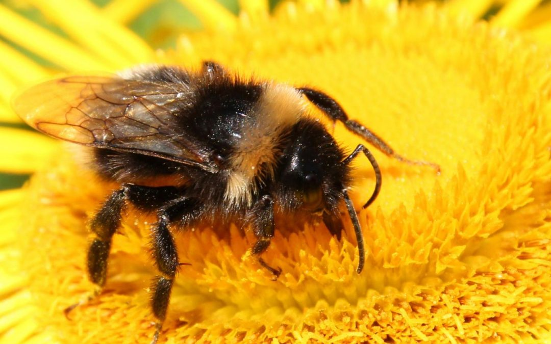Tory attempt to prevent complete EU ban on bee-killing pesticides thrown out by MEPs