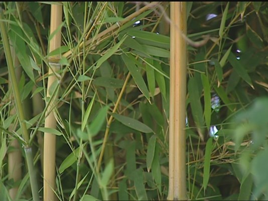 You Can Grow It: Plants at Zoo Boise