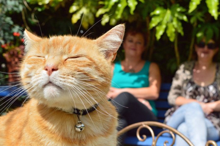 Gardening: The problems of a pet cat and garden wildlife