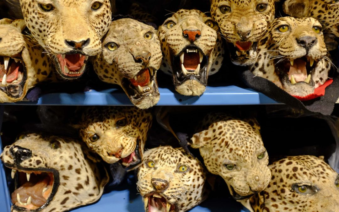 House of horrors: inside the US wildlife repository – photo essay