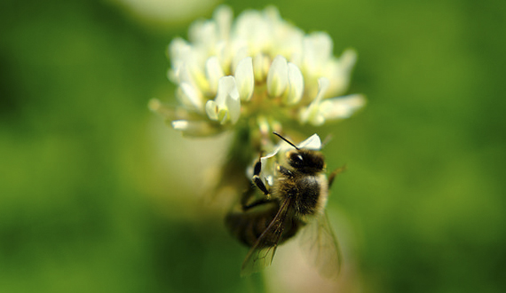 Tell the EPA to Ban Bee-killing Pesticides
