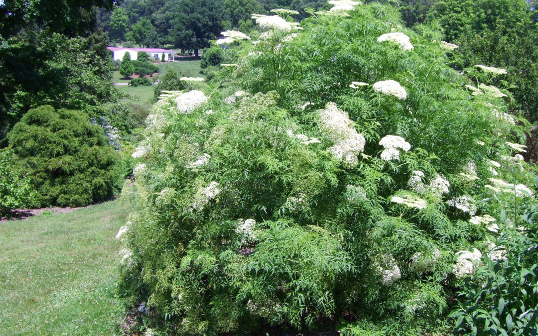 Gardening: Planning required in choosing, planting native tree that will thrive