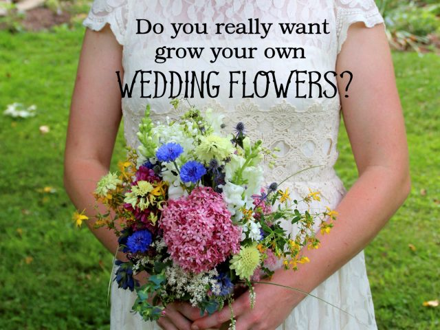 Do You Really Want To Grow Your Own Wedding Flowers Eco Save Earth