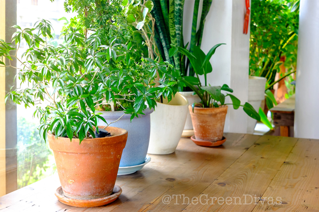 8 Easy-to-grow houseplants that you need to have