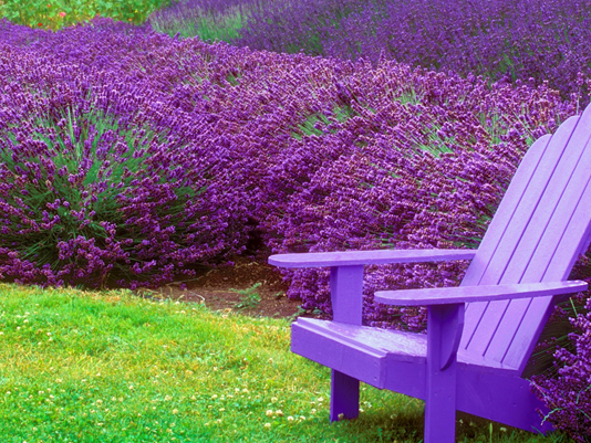 9 plants that bug bugs… including mosquitoes!