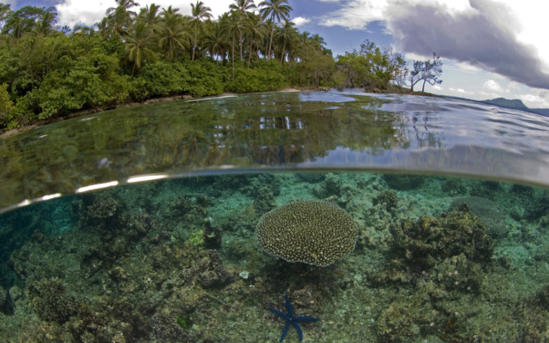 Logging Threatens Reef Fish Nurseries in the Solomon Islands