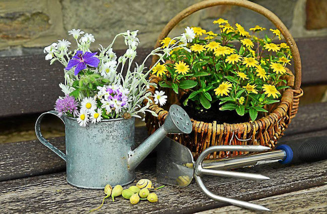 Gardening is good for the mind and body