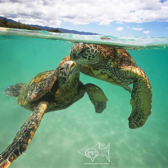 Beautiful Photo of Affectionate Turtles Reminds Us Who Really Suffers From Our Plastic Trash