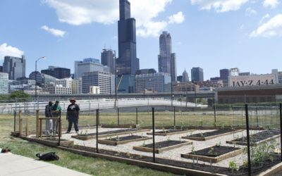 Urban Garden Addresses Food Insecurity