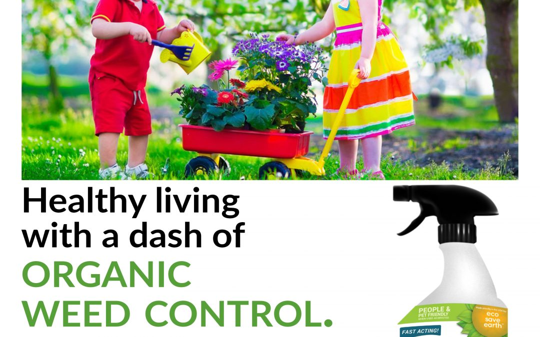 The Importance of Organic Living for Your Family
