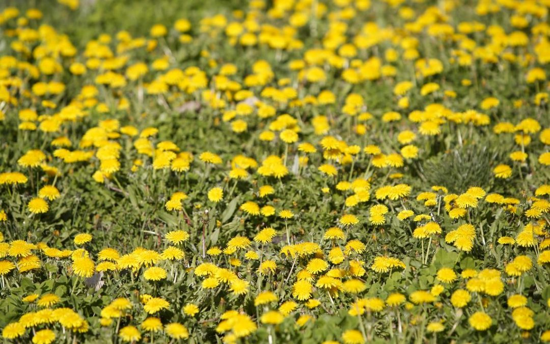 Conquering weeds in the yard and garden