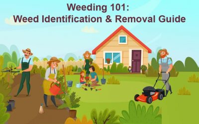 Weeding 101: Weed Identification & Removal Guide